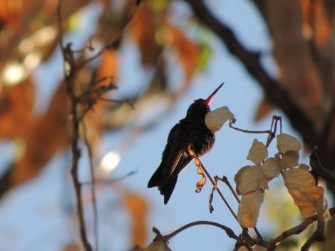 Descanso del colibrí