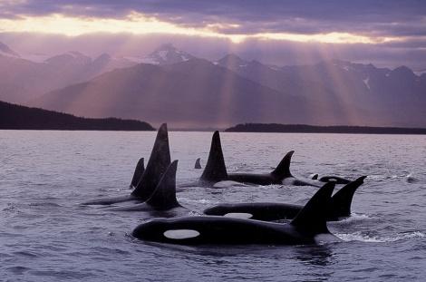 whales-circling1-1000w.jpg