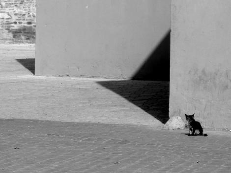 GATO1_170921_101840 Casablanca.jpg