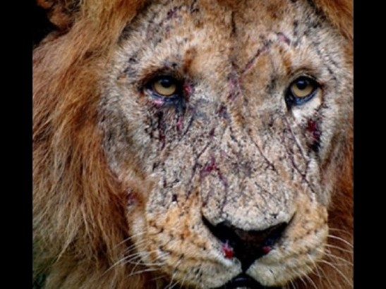 leon viejo.jpg